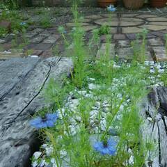 ガーデニング 今朝の我が家の花🎵 今日は湿度もなくさわ…