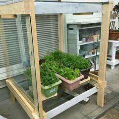家庭菜園/温室 温室 家庭菜園のために作りました 太陽の…