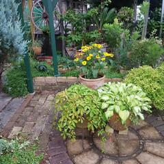 ガーデニング 今朝の庭🎵  4連休の初日、 津の天気は…