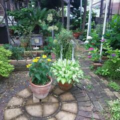 ガーデニング 今日の庭🎵  夕べは今年初めてのホタル見…