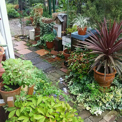 ガーデニング 今日の庭🎵 雨上がりにはいつも少しだけ草…