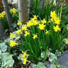 ガーデニング 夕方の花  放置しててもキチンと咲いてく…
