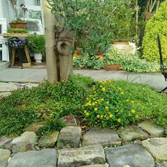 ガーデニング 今日の庭🎵 草引きしっかりしてキレイに~…