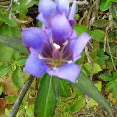 山の花 山で出会った花🎵  昨日山登りで行った、…