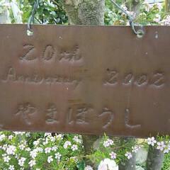 銅板プレート/ガーデニング 銅板プレート、 庭にぶら下げて使っていま…
