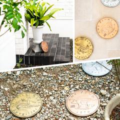 玄関インテリア/玄関ディスプレイ/庭のある暮らし/お庭/グリーン/おしゃれ/... アンプールのおすすめitem✨  まるで…(5枚目)
