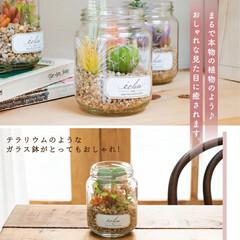 癒し/ガラス瓶/グリーンのある暮らし/抗菌/消臭/おしゃれ/... お手入れ不要の多肉植物♪ お部屋に癒しの…(2枚目)
