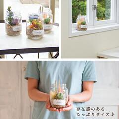 癒し/ガラス瓶/グリーンのある暮らし/抗菌/消臭/おしゃれ/... お手入れ不要の多肉植物♪ お部屋に癒しの…(5枚目)