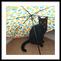 傘猫/くろねこ/うちの子ベストショット 良いとこ見つけた⛱