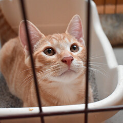 猫/野良猫/うちの子/うちの子ベストショット 視線の先には猫じゃらし!!
