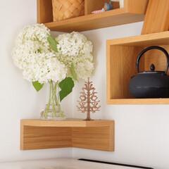 ホルムガード フローラ ベース 12cm ミディアム クリア Holmegaard Flora vase(花瓶、花器)を使ったクチコミ「最近は家の中が植物でいっぱいで嬉しいです…」