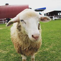 おすすめスポット/オムライス/馬/ヤギ/羊/動物/... ワールド牧場楽しかったよ( ˙꒳˙ )…