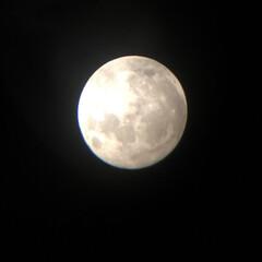 十六夜の月/満月の夜 展望会の時に撮影 すっごく綺麗な満月でし…