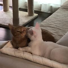 ねこ/にゃんこ/猫好き集まれ/猫好きさん/子猫/ネコ好き 猫の内緒話