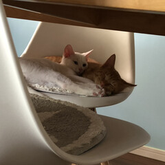 ねこ好き/猫好き集まれ/猫好きさん/子猫/ネコ好き いつも仲良しさん
