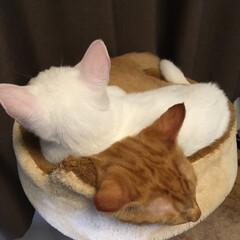 にゃんこ/猫好き集まれ/ネコ好き/猫好きさん/ねこ/子猫/... 可愛いうちの子
