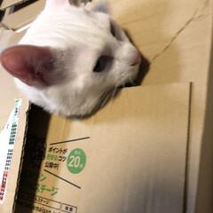 しろねこ/白猫/白ねこ部/白ねこ 何してるの?