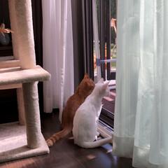 ねこ好き/ネコ好き/子猫/猫好きさん/猫好き集まれ/にゃんこ/... お外ってどんな世界なのかな?