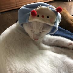 ネコ好き/子猫/猫好きさん/猫好き集まれ/にゃんこ/ねこ 可愛い❤️