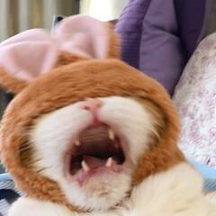変顔/猫/被り物/次のコンテストはコレだ! テーマ【変なの~】! すべてどこかが変!…
