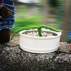 空き缶リメイク/多肉ちゃんの植木鉢に/多肉Life/多肉植物 リメ缶😊(3枚目)
