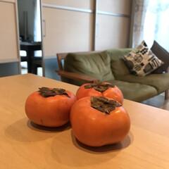 柿/秋/フード 食欲の秋! 柿をいただきました♡ ビタミ…