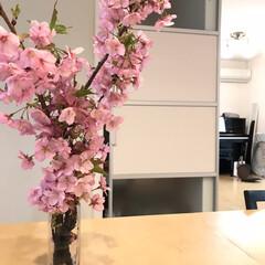 彩りのある暮し/河津桜/小さい春 一足先に咲く河津桜は私を元気にしてくれる…