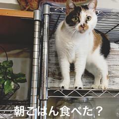 保護猫/しあわせ/ねこ/猫大好き/LIMIAペット同好会/住まい/... サツキは食べたよ💖🐱だからまた寝る😴💕 …
