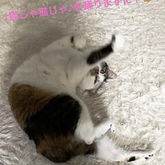 保護猫/しあわせ/ねこ/猫大好き/LIMIAペット同好会/住まい/... ひとりでクネクネ踊ってるサツキ。なんとな…