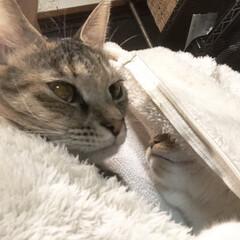 保護猫/しあわせ/ねこ/猫大好き/LIMIAペット同好会/住まい/... 懐に猫を2匹も入れると相当苦しいのでやめ…(1枚目)