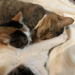 保護猫/ねこ/暮らし 仲良しだね😃💕