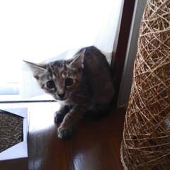 保護猫/ねこ/暮らし 生まれて初めて掃除機の音を聴いてビビった…