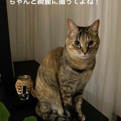 保護猫/ねこ/しあわせ/猫大好き/LIMIAペット同好会/住まい/... おはようございます!😃 アヤメちゃんは写…