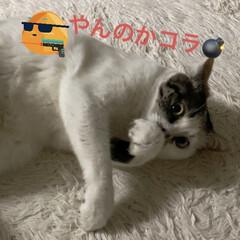 猫大好き/LIMIAペット同好会/保護猫/ねこ/しあわせ/住まい/... 朝から謎のスイッチが入ってしまったサツキ…