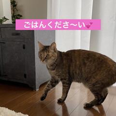 保護猫/ねこ/しあわせ/住まい/暮らし アヤメちゃんは美人さん💖