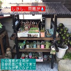 多肉棚/DIY 梅雨の合間に少しづつ…屋根つけたぁ🙌🏻 …(5枚目)