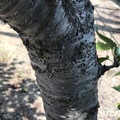 木の表情 十人十色( ¨̮ )︎︎ 木だって色んな…(5枚目)