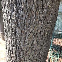 木の表情 十人十色( ¨̮ )︎︎ 木だって色んな…(2枚目)