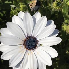 お花/柴犬/お散歩 どうしてこのお花が撮れたかと言うと… う…