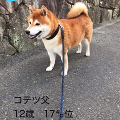 柴犬/わんこ同好会 お久しぶりです🐕🐕🐕  昨日ボクはちょっ…(2枚目)