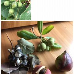 木の実/リメ缶/多肉寄せ植え/流木/DIY/犬 上手くできないけど💦 ①乙女心・姫花月・…(7枚目)