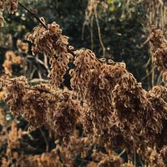 自然/冬の姿 冬の間は… 種や実をじっとじっと 温めて…