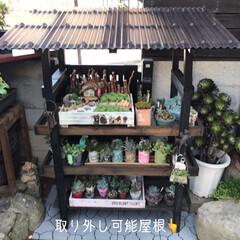 多肉棚/DIY 梅雨の合間に少しづつ…屋根つけたぁ🙌🏻 …(1枚目)