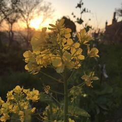 夕日とお花 今日の夕日と…(2枚目)