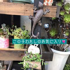多肉棚/DIY 梅雨の合間に少しづつ…屋根つけたぁ🙌🏻 …(9枚目)