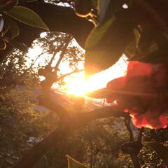夕暮れ/ビオラ ビオラ植えました🤗黄色はパンジー。 ・・…(4枚目)
