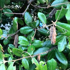 自然 今日のほっこり(*´˘`*)(2枚目)