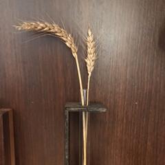 コンバイン/麦/DIY花瓶 麦の収穫時期みたいですね🌾  田舎のおじ…(2枚目)