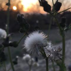 夕日とお花 今日の夕日と…(4枚目)