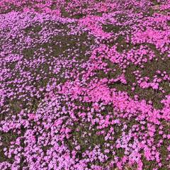 春の花/柴犬/DIY一輪挿し お花の投稿をしようと思ったら… すまして…(10枚目)